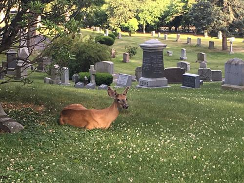 Wildlife at Newton Cemtery
