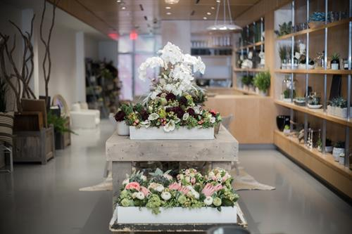 Featured Project: Fleuri - Chestnut Hill