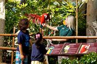 Exotic Bird Show