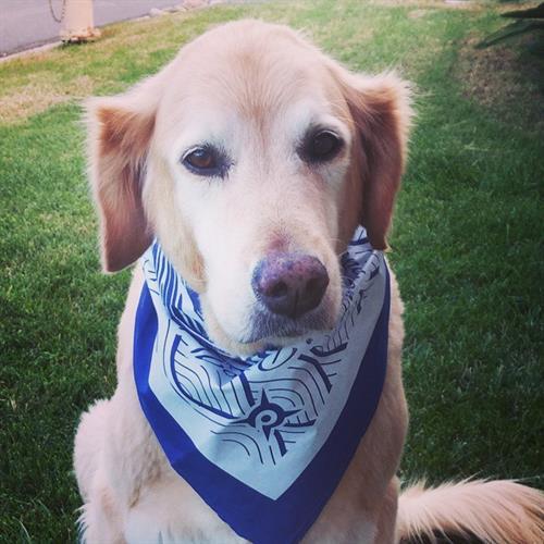 we love dogs and screenprinting doggy bandanas