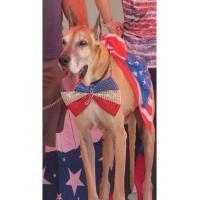 Yankee Doodle Dog Show 2019