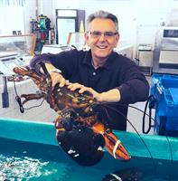 John at Orleans Seafood Market shows off a giant lobster!