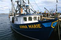 The Donna Marie is our own boat and brings in scallops fresh from the ocean.