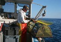 Local lobstermen keep our lobster tanks full.