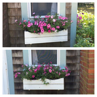 Maintaining Summer Rental Proeprty's Flower Boxes and Containers