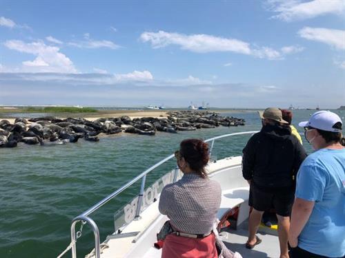 Seals on Tern Island