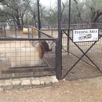 Lone Star School of Music is Proud to Sponsor the Austin Zoo.