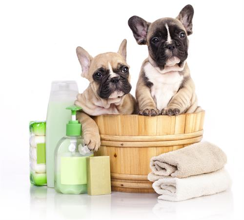 Treat your fur baby to a spa today