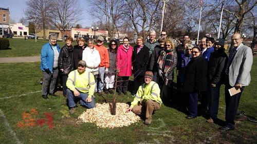 Tree planting in Chandler Park