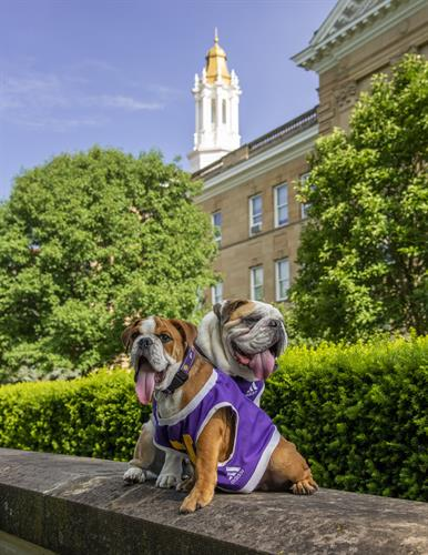 New WIU mascot Col. Rock IV (aka Ray) and retired mascot Col. Rock III (aka Rock)