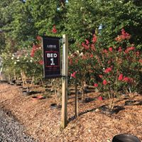 We have 16 beds  in our nursery full of trees and shrubs.  We install and deliver as well!