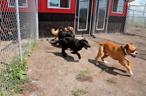 780's dog daycare.