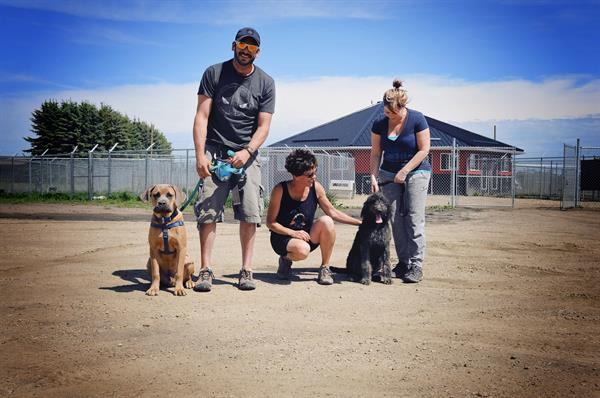 Book a $25 dog training consult with our 100% money back guarantee.