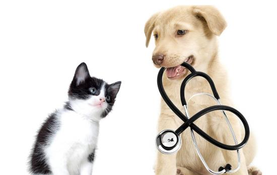 Pets | Veterinary