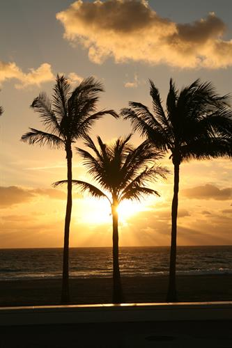 Gallery Image Golden_Palms.jpg