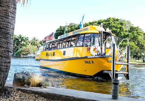 Gallery Image Water_Taxi_Pic_with_Iguana.jpeg