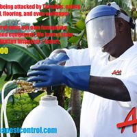 AAA Pest Control, Fort Lauderdale White Fly Spraying