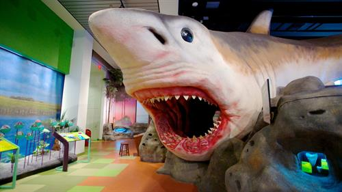 Step into the mouth of a giant megalodon, an extinct species of shark that lived many millions of years ago, and live to tell the tale. Go 65 million years back in time and get a new perspective on Florida's prehistoric past and how it was shaped by climate change and changes in sea levels.