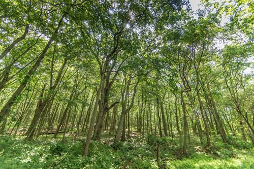 Gallery Image trees.jpeg