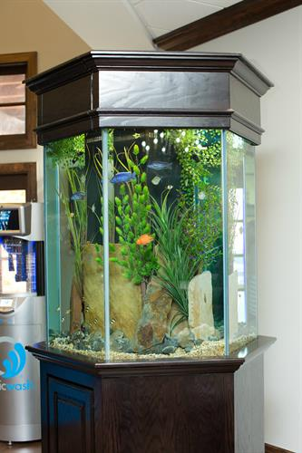 Fish Tank/ Front Waiting Area