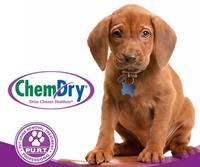 Pet Odor and Urine Removal Treatment