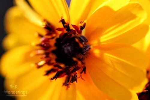 A bright spring close-up