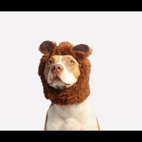 Pet Costume Contest at Southwest Missouri Bank