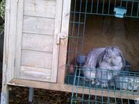 Bunny, the bunny