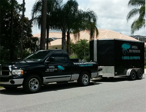 Lawn Spraying and Palm Tree Treatments Port Orange, Fl.