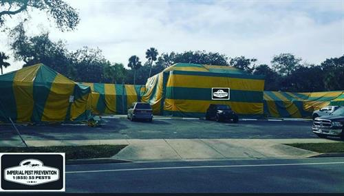 Tent Fumigation on historic building in Daytona beach