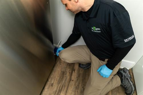 General Household Pests