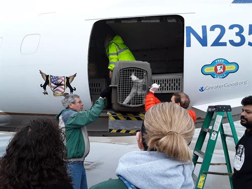 Learn more about our rescue efforts with transports, like this one from Wings of Rescue