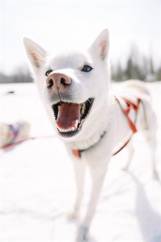 Gallery Image happy_dog.jpg