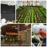 Our Urban Farm