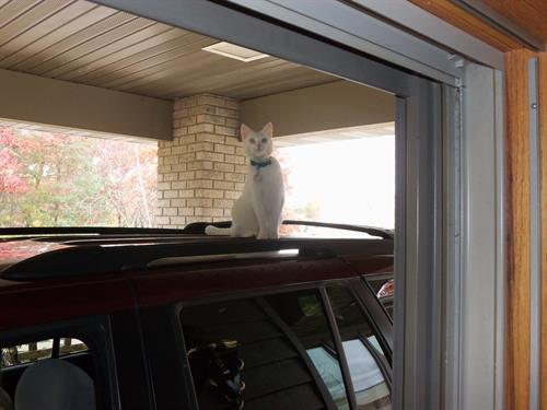 Purrl in the drive-up