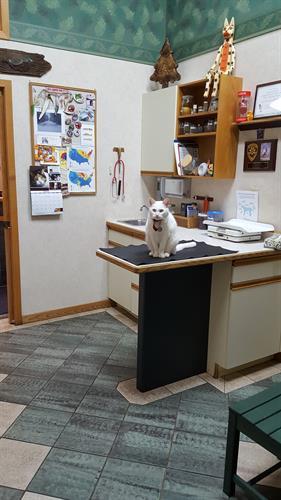 Canine Exam Room