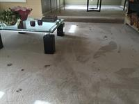 Our process brings up the deepest set pet hair and grime from the back of your carpets!
