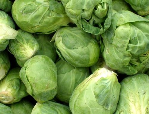 Gallery Image Brussel_Sprouts.JPG