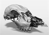 Skull Scan: Capturing physical objects into digital 3d models