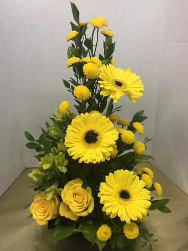 "Garden of Sunshine Gerbera Arrangement  For birthdays, get well or ""just because you're special"" greetings, our sunny garden of always fresh blossoms is sure to bring delight!  $69.95"