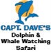 Captain Dave's Dolphin & Whale Safari