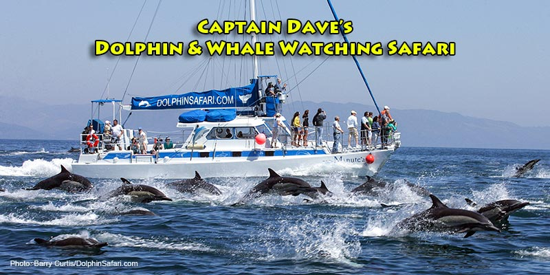 Captain Dave's Dolphin & Whale Watching Safari