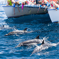 Wildlife at Your Fingertips Aboard Our Catamaran DolphinSafari