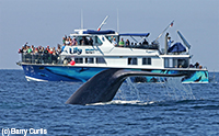 Luxury Power Catamaran Lily and a Blue Whale