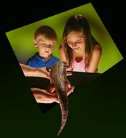 Science Center- Featuring Live Reptiles and Amphibians
