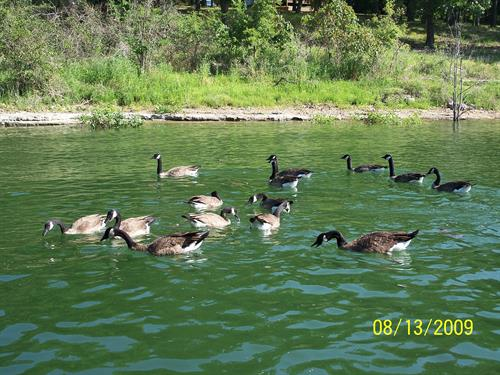 Ducks and Geese are always fun to see and feed at our Dock 1.