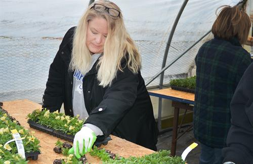 Alliance admin Linda Wilson helps with the flower pot planting during Keep Kokomo Beautiful.