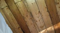 Anobium borer damage to baltic pine floorboards