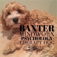 Our therapy dog, Baxter