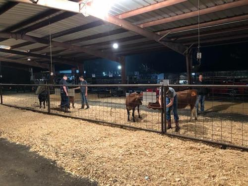 livestock care during fair week